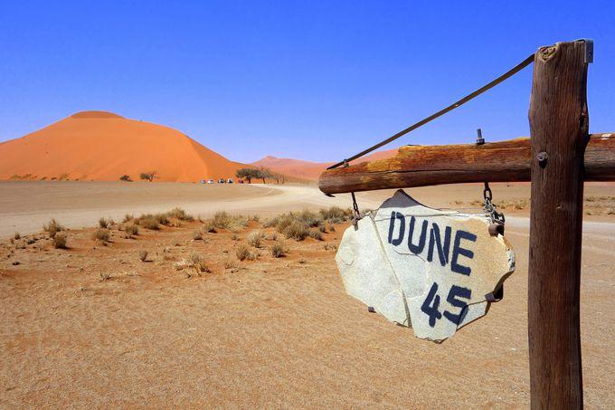登れる大砂丘「DUNE45」
