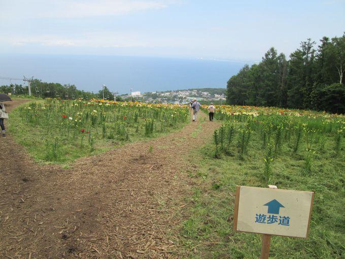 麓から山頂までは1100メートルの遊歩道。リフトもあるから安心!