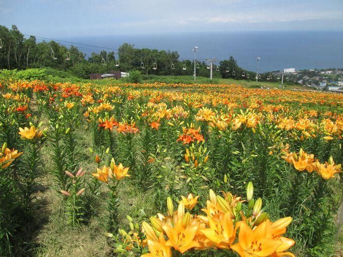 ゾーンごとに変わる花の種類やカラーも楽しんで!