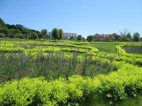 美しい癒しの英国風庭園!北海道由仁町「ゆにガーデン」の魅力|北海道|トラベルjp<たびねす>