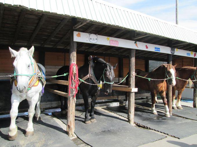 北海道の馬「ばん馬」との触れ合いも!「アースドリーム角山農場」