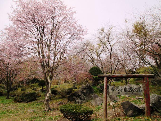 火山噴火の面影が残るダイナミックな公園!「善光寺自然公園」