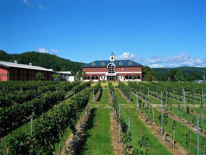 葡萄畑の向こうにワインのお城