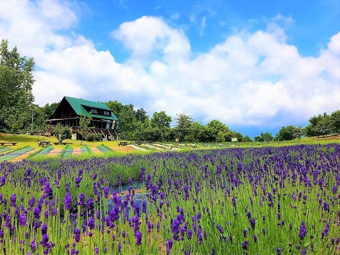 なんて可愛いの~!山形のラベンダー畑「玉虫沼農村公園かおりの広場」