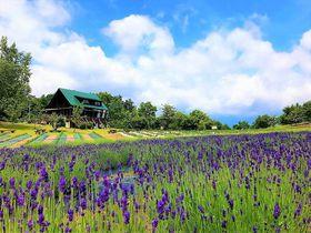 なんて可愛いの~!山形のラベンダー畑「玉虫沼農村公園かおりの広場」|山形県|トラベルjp<たびねす>