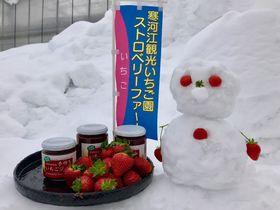 雪国山形で雪中いちご狩り!寒河江観光いちご園で冬の思い出作り