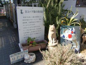 横浜・山手の「ヨコハマ猫の美術館」に所狭しと古今東西の猫アートが並ぶ|神奈川県|トラベルjp<たびねす>