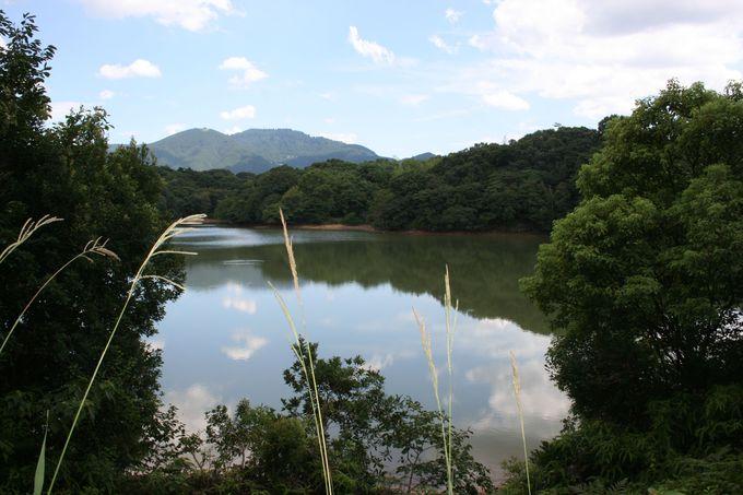 遊歩道の途中には「蒲田池」を望む絶景スポット