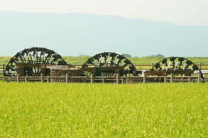 原鶴温泉の鵜飼、周辺部も果物狩りや三連水車、紅葉など観光名所が充実!