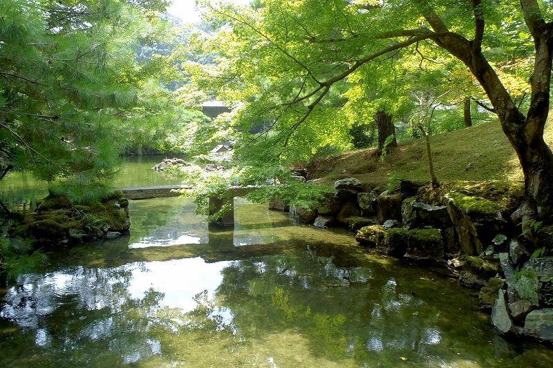 緑豊かな回遊式庭園「池泉庭園」は温泉水を利用して鯉を放流。秋の紅葉もおすすめ