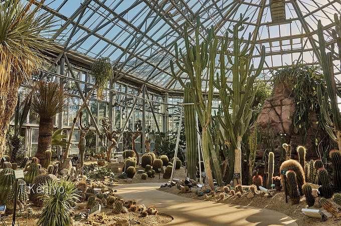 昼夜続けて体験してこそ分かる!「世界を旅する植物館」の魅力