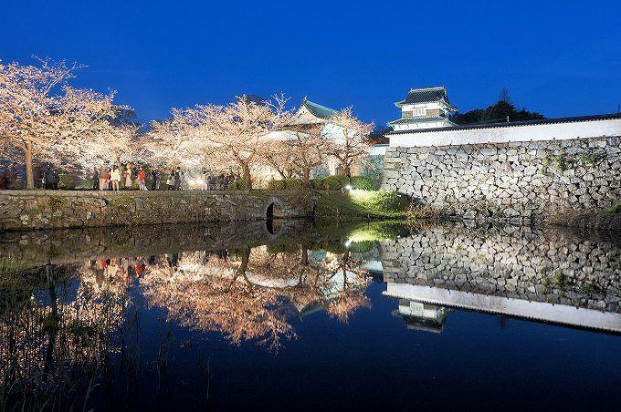 「福岡城さくらまつり ライトアップ」の画像検索結果