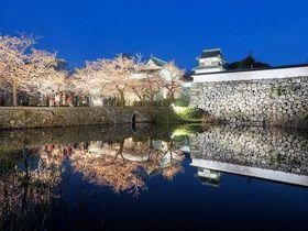 「福岡城さくらまつり」は夜桜がおすすめ!見所5選|福岡県|トラベルjp 旅行ガイド