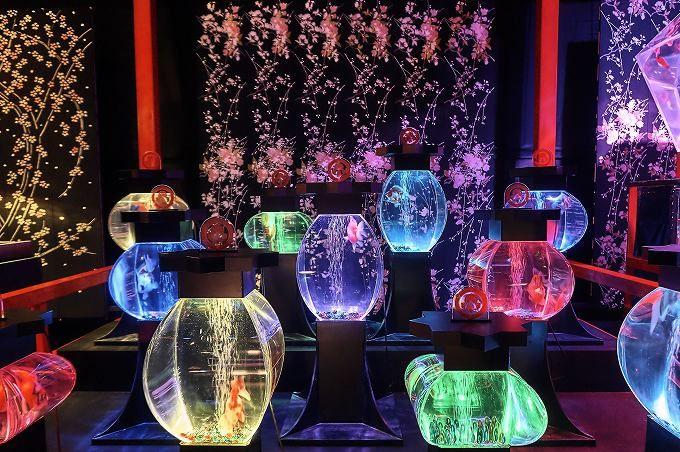 「アートアクアリウム展」博多で開催!金魚と光が織り成す芸術美