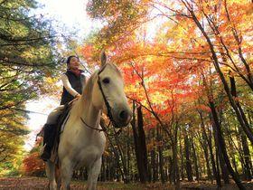 初めてでも馬でお散歩できる!小淵沢「カナディアンキャンプ八ヶ岳」で外乗体験