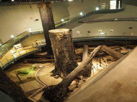 4000年前の太古の森へ!島根県「三瓶小豆原埋没林公園」で古代に還る