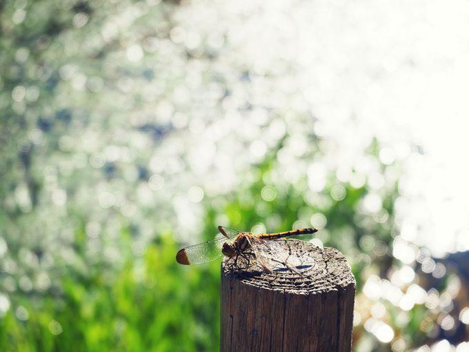 琥珀色の美人の湯!北海道「開拓ふくろふ乃湯」で大自然に抱かれる