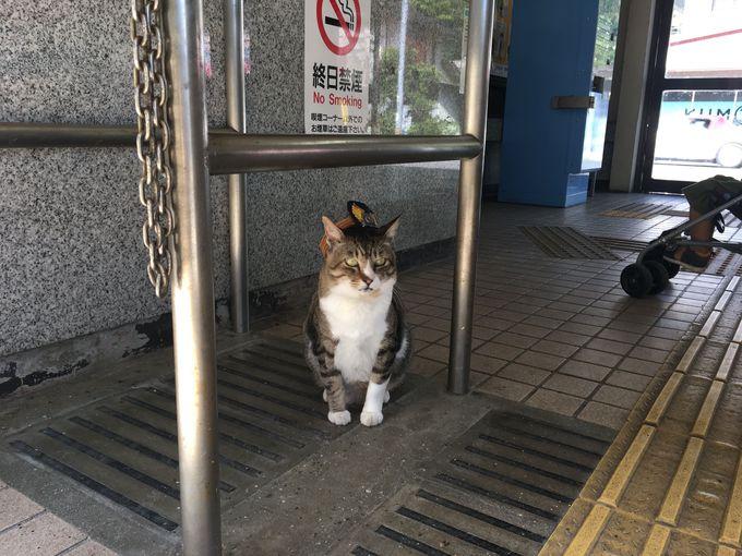 野良猫から駅長に!聡明なお顔のトラ猫「りょうま」