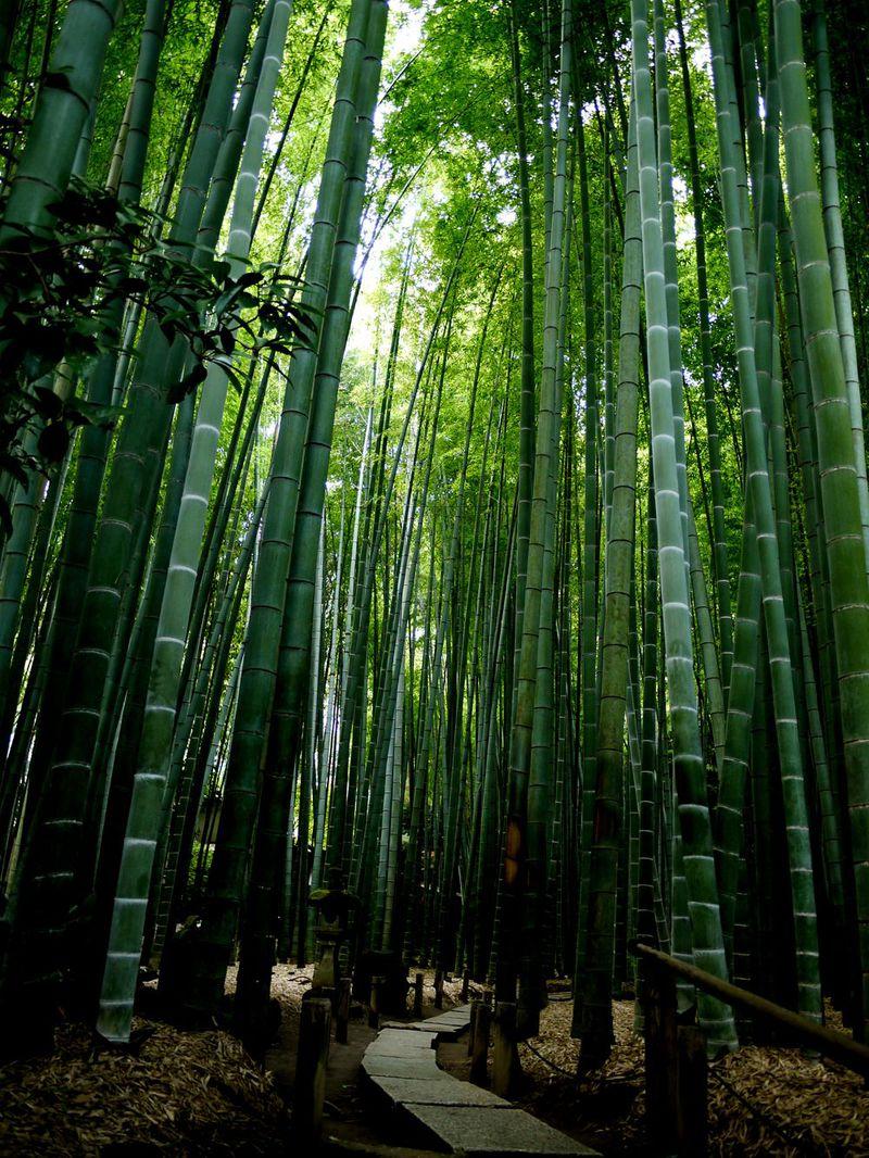鎌倉にもあった!京都嵯峨野の竹林を思わせる竹の寺!鎌倉の癒しスポット報国寺