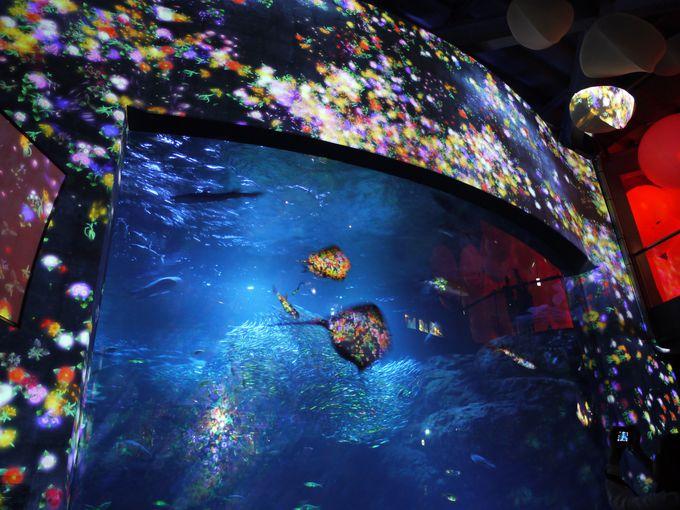 花と水槽の魚たちの美しさに息を飲む…!