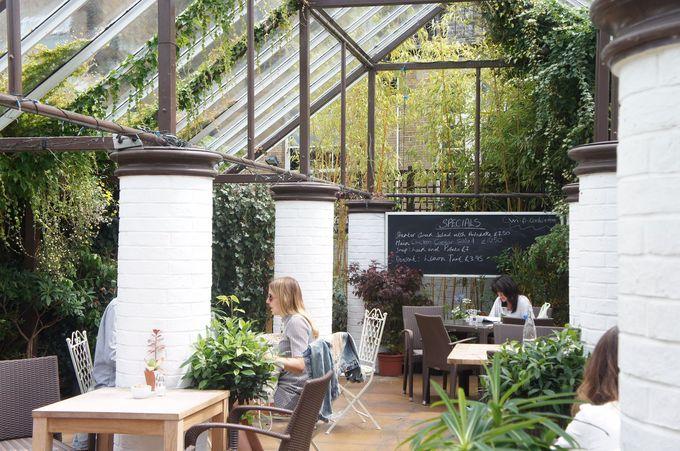 温室がお洒落なカフェに!