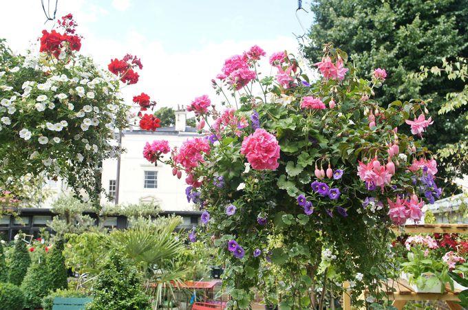 ロンドンの素敵なお庭を垣間見る