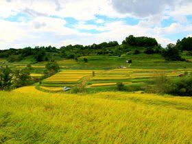 秋は金色の棚田が美しい!奈良・明日香の「稲渕」|奈良県|トラベルjp<たびねす>