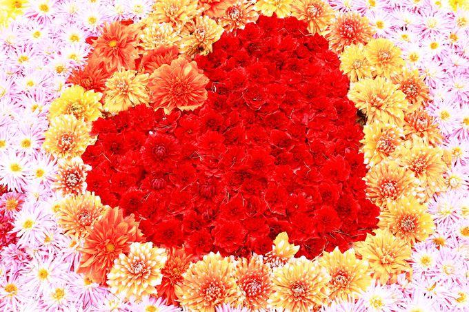 ダリアの花じゅうたん!