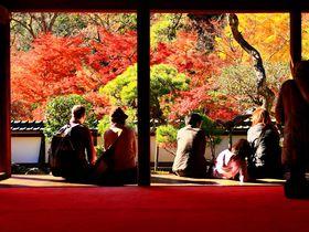 紅葉の名所・奈良「正暦寺」は実は清酒発祥の地!?|奈良県|トラベルjp<たびねす>