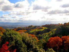 奈良の紅葉スポット「信貴山 朝護孫子寺」のオススメ撮影ポイント!|奈良県|トラベルjp<たびねす>