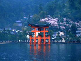 大鳥居とのコラボも!宮島オススメ桜撮影スポット5選|広島県|トラベルjp<たびねす>