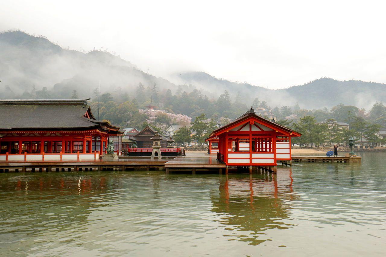 厳島神社越しの桜