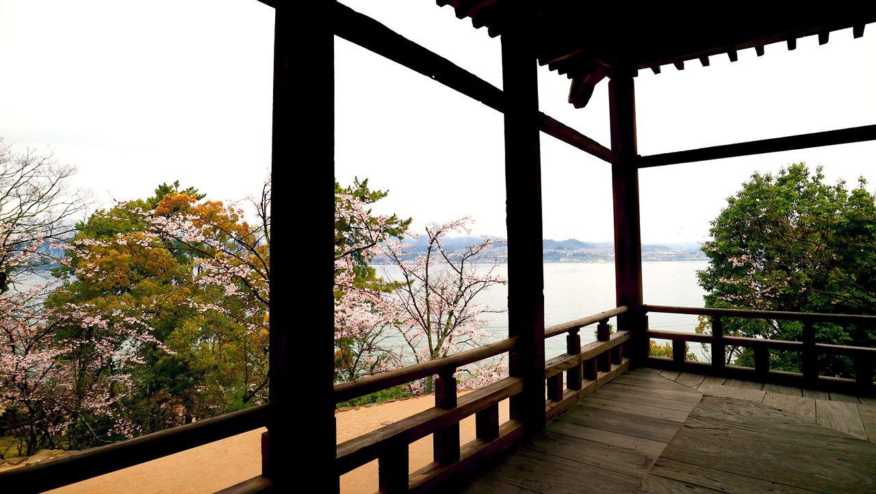 千畳閣から眺める桜