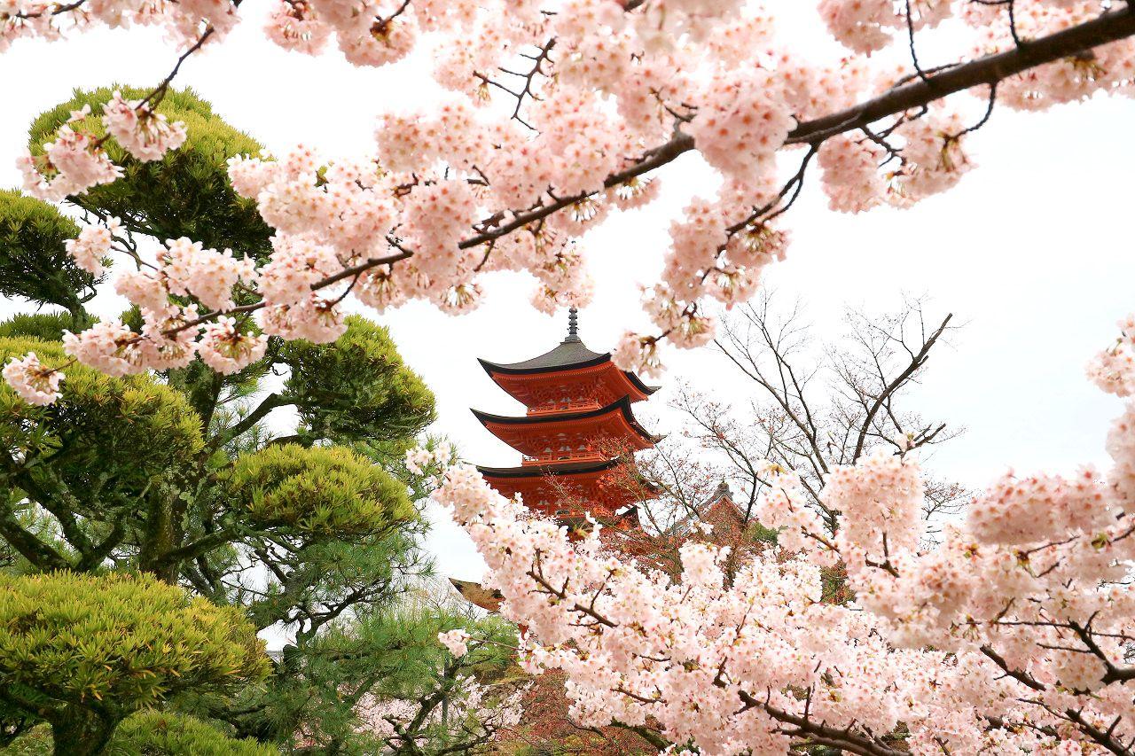 桜と瓦屋根と海。
