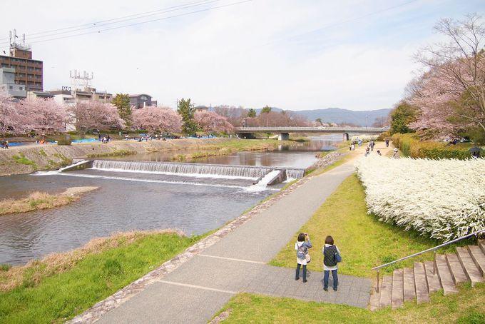 河川敷でのんびりと眺める鴨川の桜並木