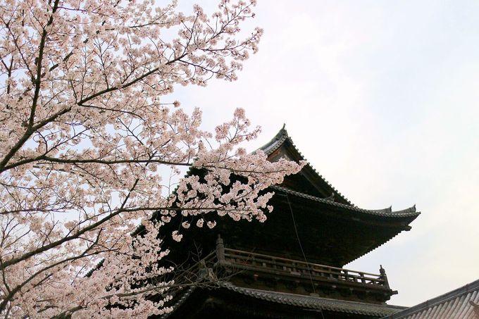 桜と共に水路閣も無料で楽しめる南禅寺