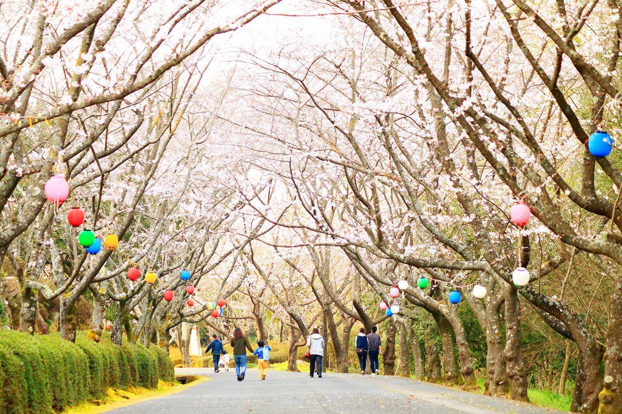公渕森林公園の桜トンネル