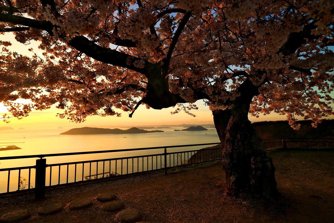 ちょい地味だけどフォトジェニックな香川の桜スポット5選