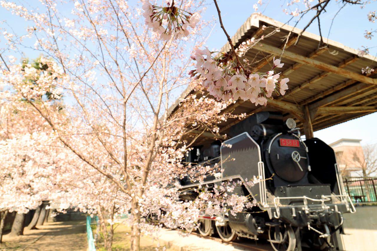 小規模だけどSLと桜のコラボが素敵な番町二丁目公園