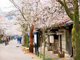 かつての宿場町が今や桜の名所!岡山・新庄村「がいせん桜」|岡山県|トラベルjp<たびねす>