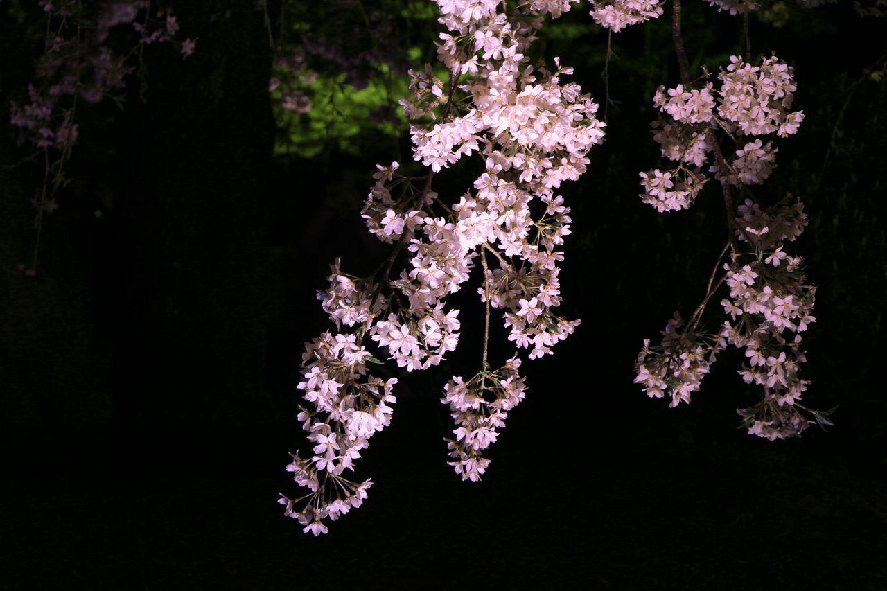 ライトアップは桜だけじゃない