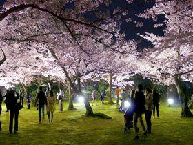 夜桜が素敵!高松「栗林公園」で楽しむ春のライトアップ|香川県|トラベルjp<たびねす>