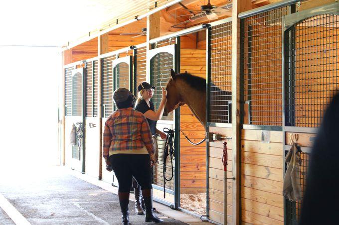 乗馬やスパ・ライブキッチンなど、アクティビティも盛り沢山!