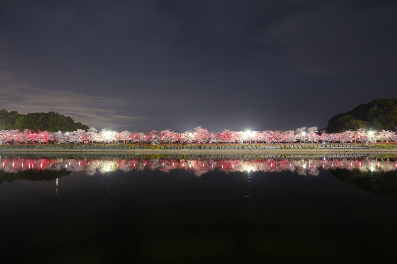 インスタ映えする香川の桜!オススメお花見スポット5選