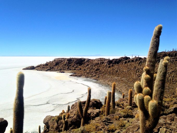ウユニ塩湖に巨大サボテン?!不思議な光景が広がる「インカワシ島」