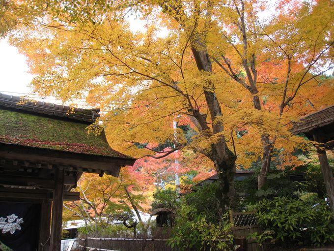「常楽寺」のすぐそばにある「長寿寺」