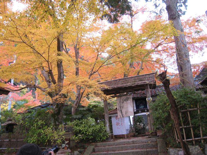 「長寿寺」の参道