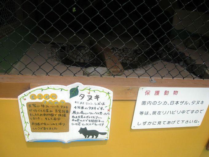 保護施設から出た「タヌキ」の赤ちゃん