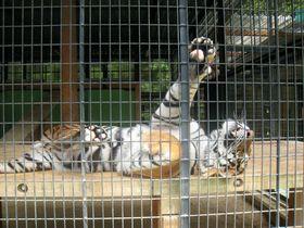 三重にある「大内山動物園」を親子で愉しもう!全国的にも珍しい保護動物の癒しの場|三重県|トラベルjp<たびねす>