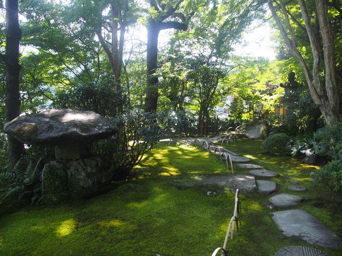 これぞ庭園美!苔むした庭園と上手くマッチした飛び石